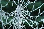Frozen cobwebs look almost magical, reminiscent of snowflakes.  And scientists were able to identify them
