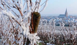 French winemakers: A catastrophe this year, with eighty percent of vineyards damaged by frost