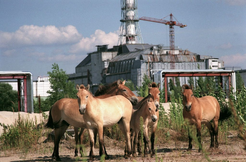 """Genetic mutations after a power plant explosion: a new study examines """"Chernobyl children"""""""