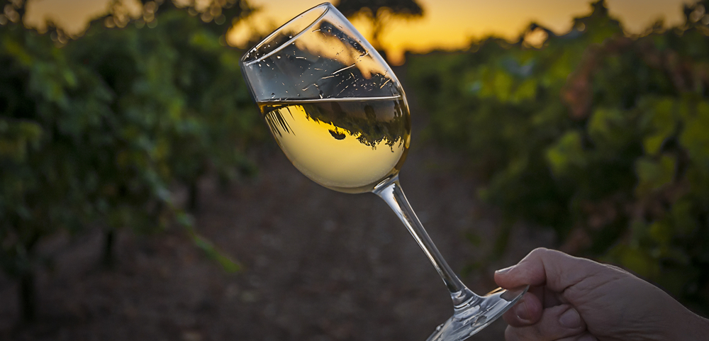 Come to South Moravia not only for wine