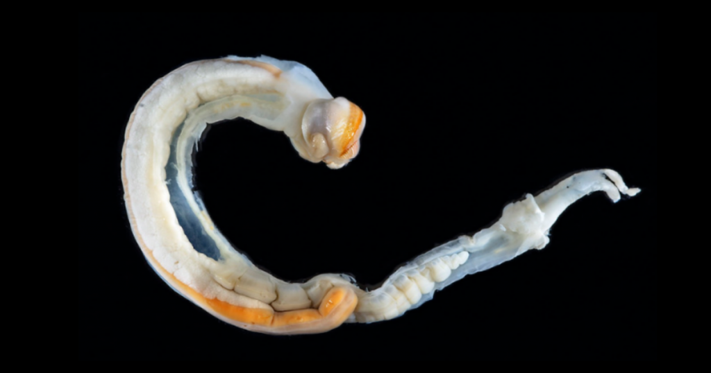 The catastrophe caused by ship worms remains a mystery for thousands of years in the United Kingdom