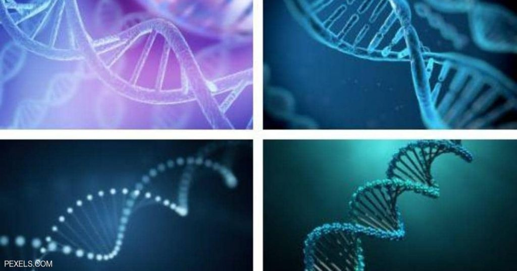 """A """"surprise explosion"""" study on the relationship of our DNA to our extinct ancestors"""
