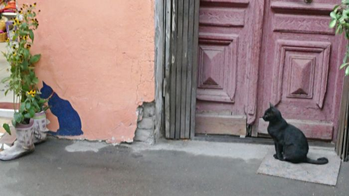 Still life with a cat in Tbilisi