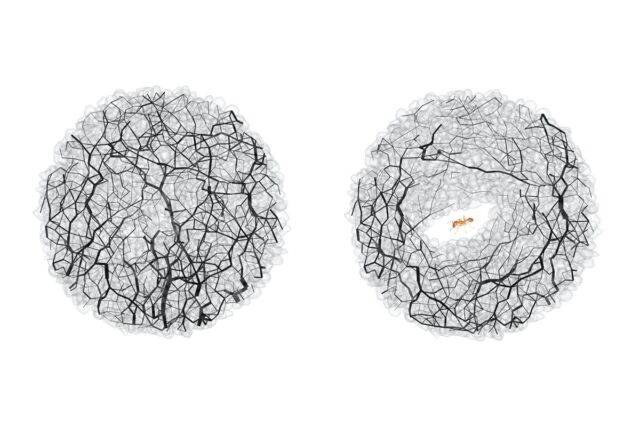 Granular forces (black lines) at the same location in the soil before (left) and after (right) the ant tunnel.