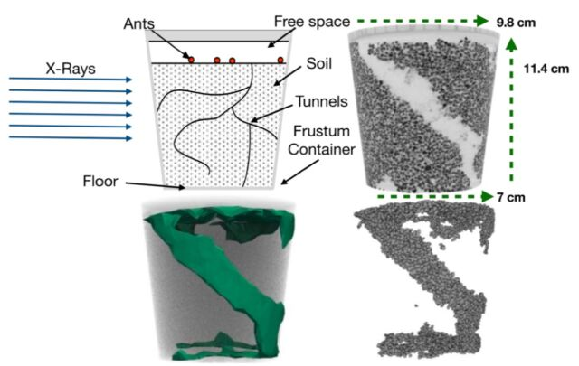 Top left: experimental design.  Top right: X-ray image of a completed tunnel.  Bottom left: model fitting of removed particles.  Bottom right: Numerical reconstitution of particles removed by ants at the initial site.