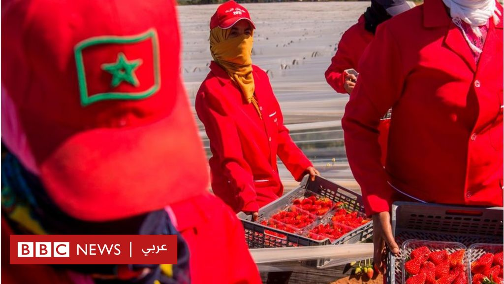 Western Sahara: European court nullifies two trade agreements between the EU and Morocco