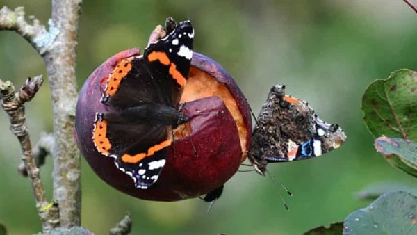 """Butterflies are leaving the UK ... and experts warn: """"Nature is in danger"""""""
